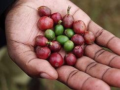 Cameroon 8.jpg