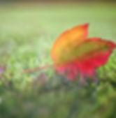 Lovely leafviktor-forgacs-1145418-unspla