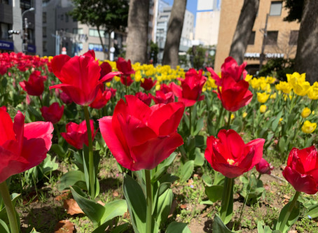 横浜に春が来ました