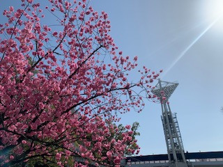 すっかり春。