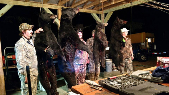 Big Bear under new skinning shed