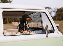Evie Insta KOmbi dog sits in Kombi window