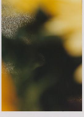 31_floresmarx.jpg