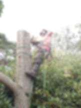 Tree Surgery in Dorset. Man using saw to cut tree down.