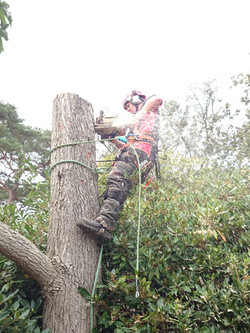 Tree Surgery Services Dorset