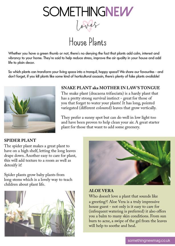Best pot plants