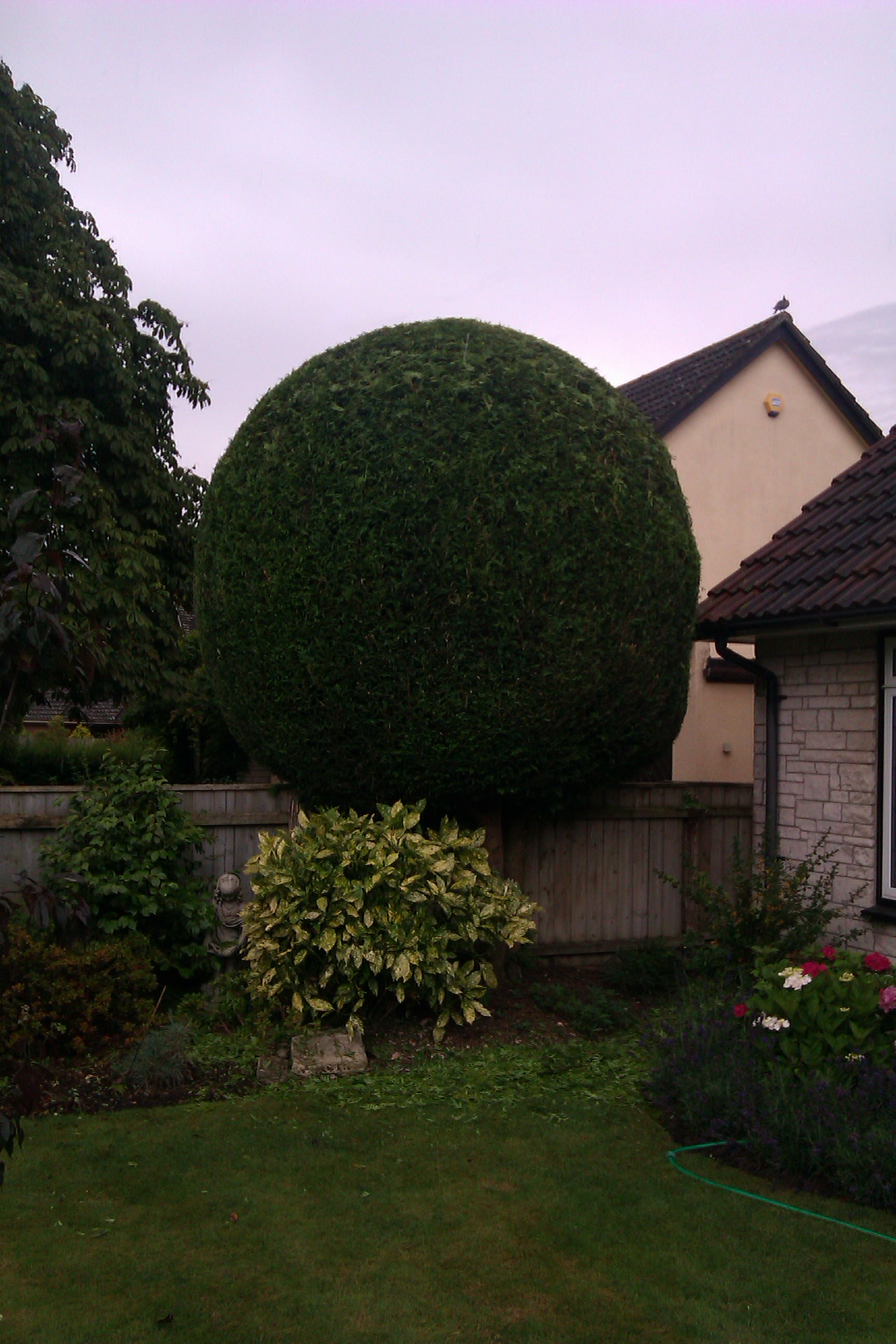 Topiary in Dorset