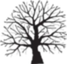 Tree thinning illustration