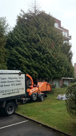 Coppice Tree and Garden Services