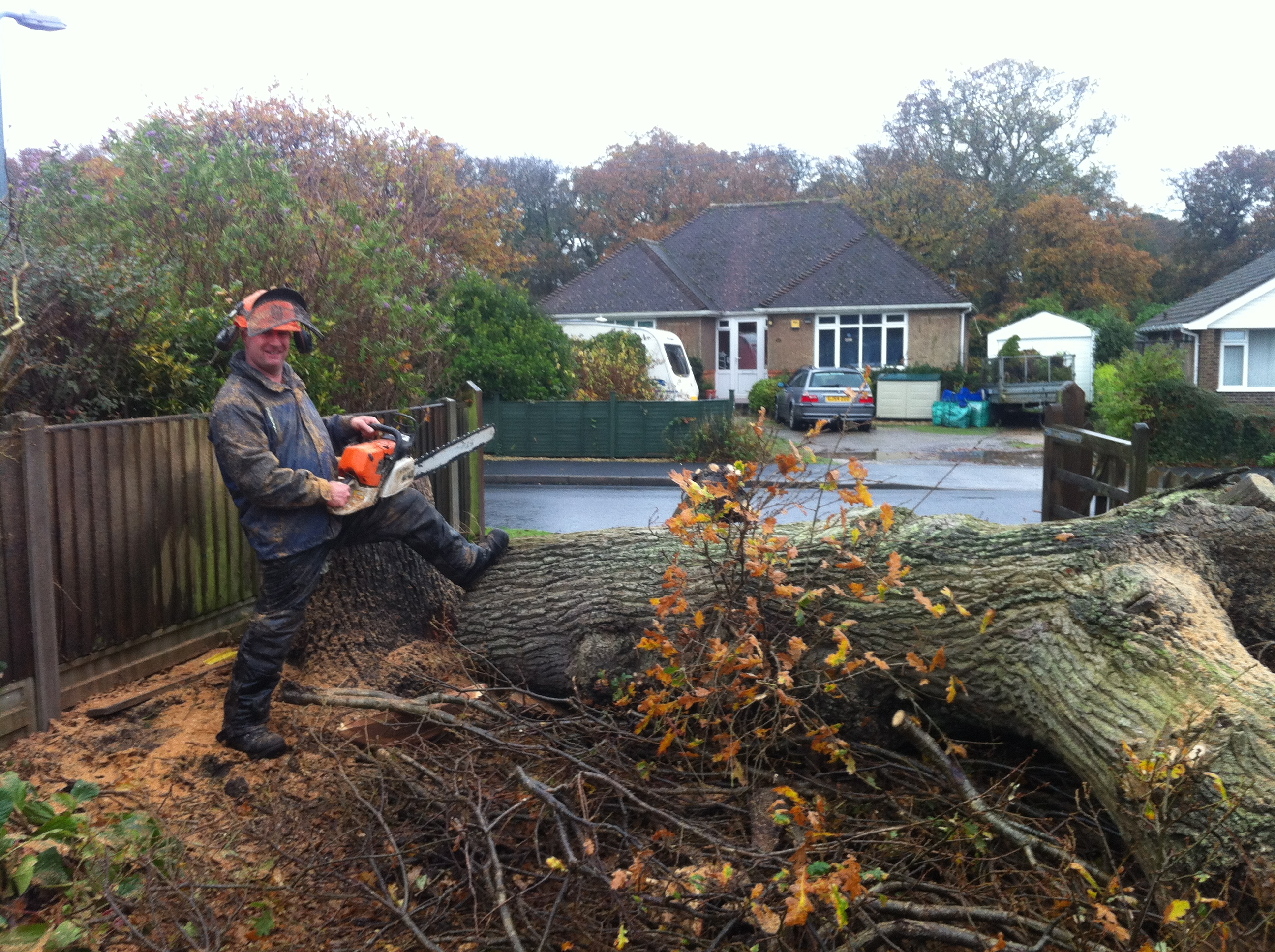Tree Services Dorset