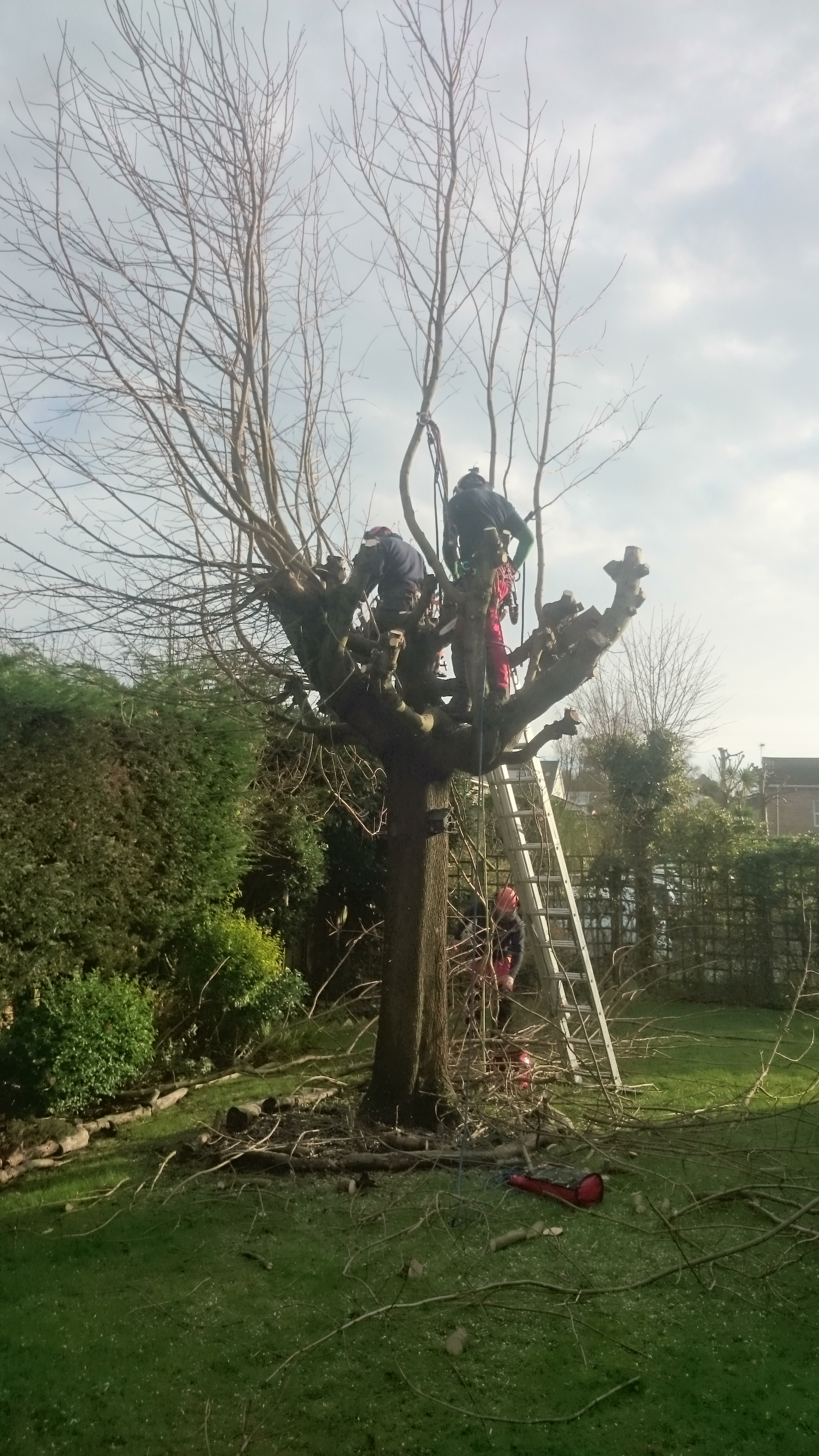 Tree Removal in Dorset