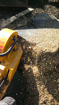 Stump grinding to remove tree stump in Dorset