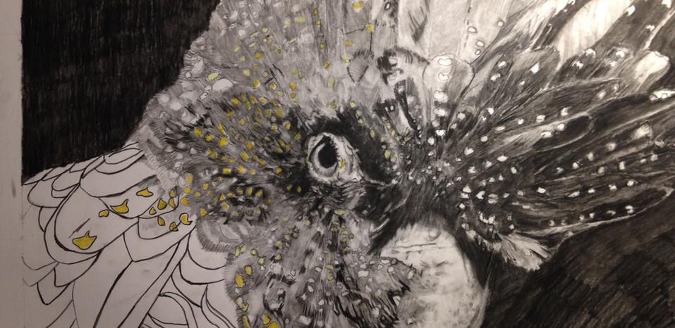 yellow tailed cockatoo drawing.jpg