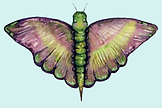 Charlie Butterfly teal.png