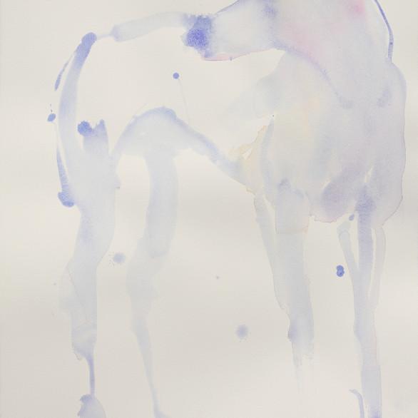 Greyhound, 75 x 55 cm, watercolour.
