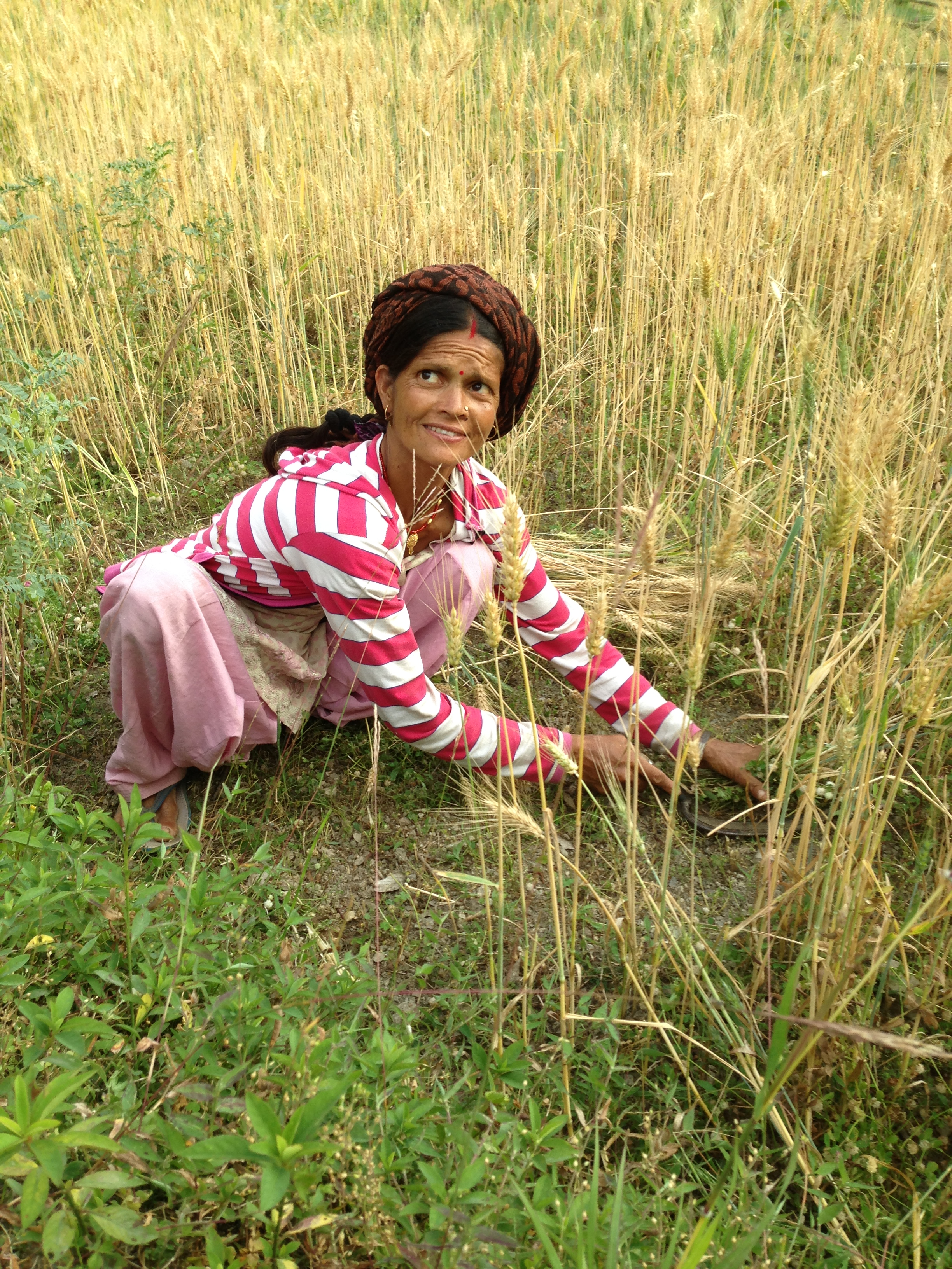 Harvest in Garhwal