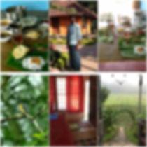 Wayanad collage.jpg