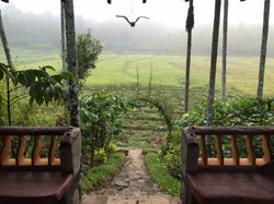 Wayanad home view
