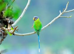 Bird Watcher's Paradise