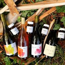 Avani Wine Line Up