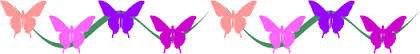 butterfly-border.jpg