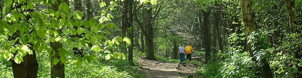 forest walk 2.jpg