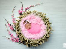 Newborn da Lavínia - 10 dias!