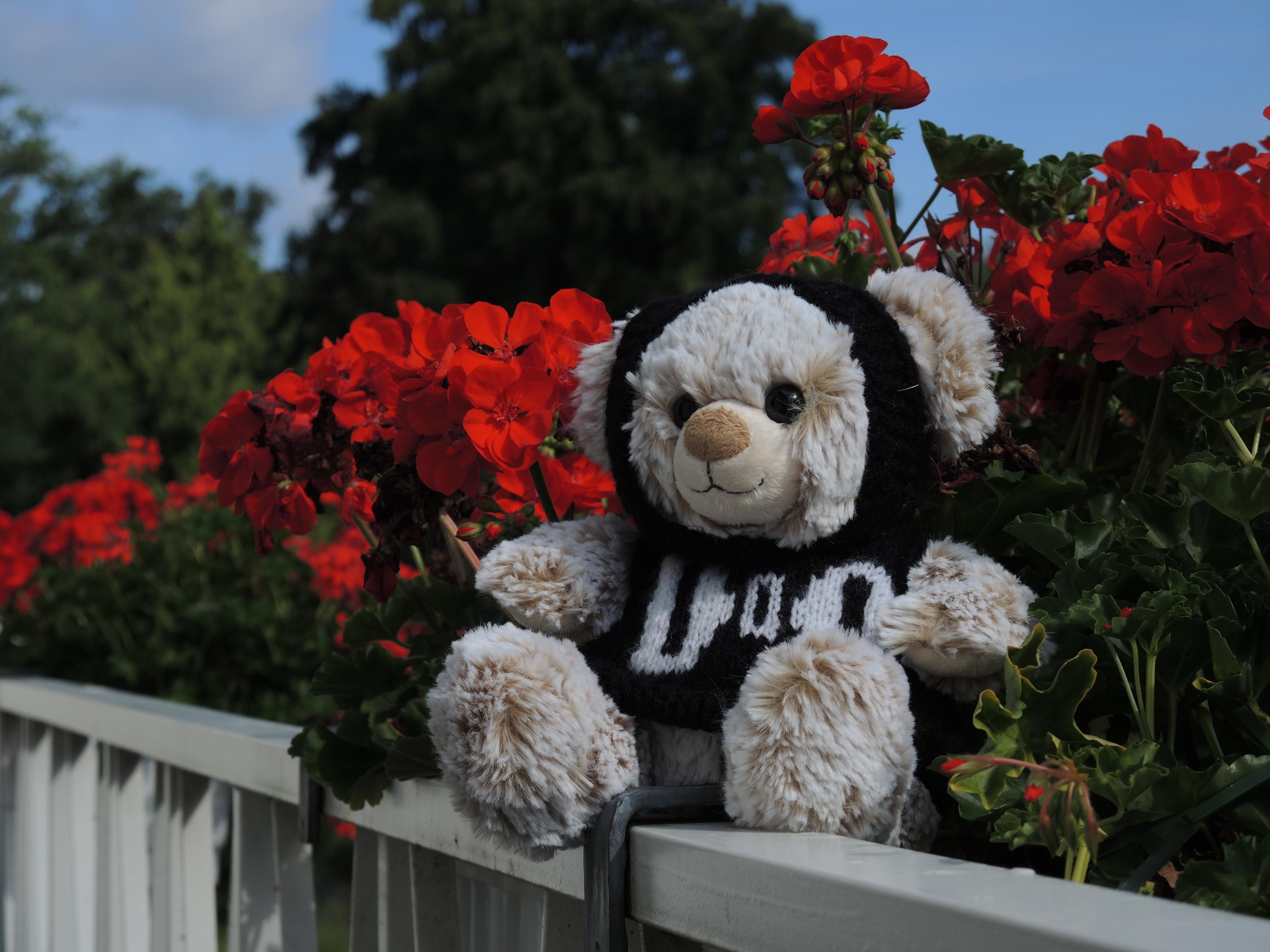 Doddy genießt die Blumenpracht