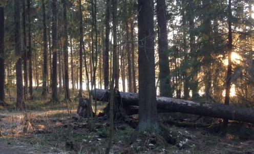 Day 9 - Forest in Helsinki