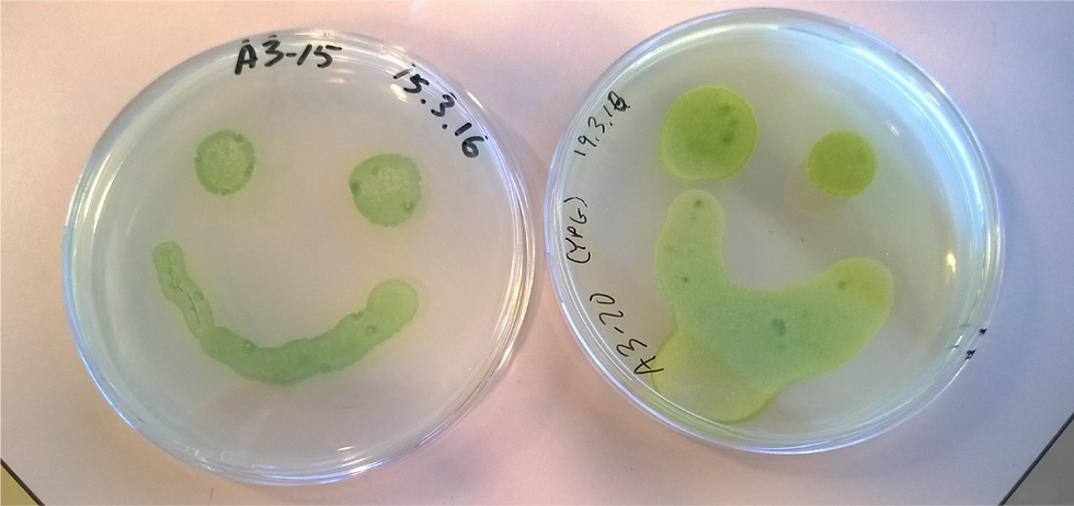 Algae-01.png