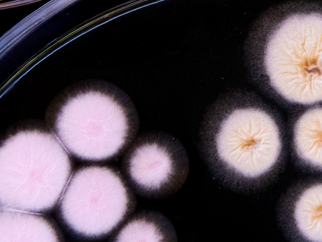 Gene expression engineering in fungi.