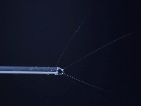Spider Silk – the supermaterial of the future!