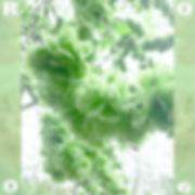 GW R006-006_1500.jpg