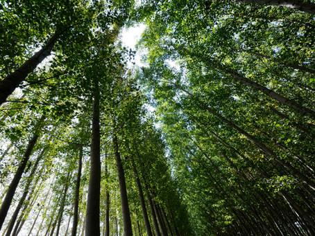Dia Mundial das florestas - 21 de março