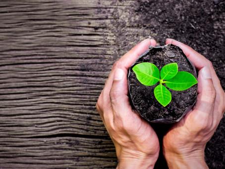 Viva Ciência - A importância das plantas