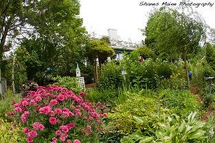 Garden in bloom at Clay Hill Farm