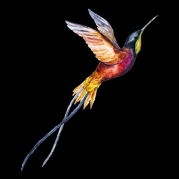 Watercolor Hummingbird, Orange, Pink, Purple, Blue colors, Wings spread in flight