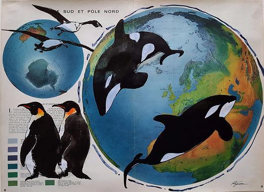 Polenordpolesur-Orques.jpg