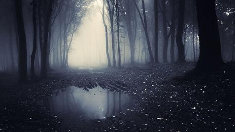 dark-forest-3840x2160.jpg