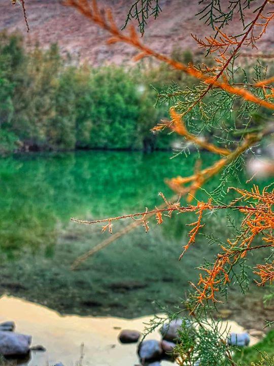 סדנת צילום בטבע נייד