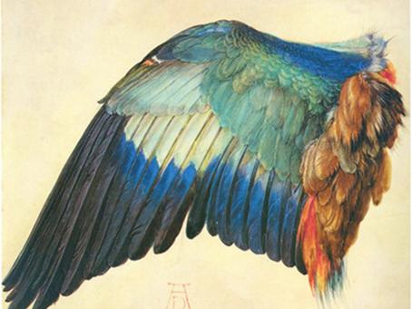 Albrecht Dürer preferred to take inspiration from nature…