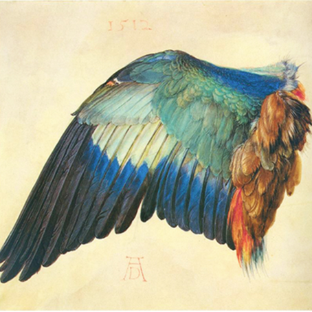 Albrecht Dürer preferred to take inspiration from nature…