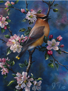 cedar waxwing with blue background perched on a branch with pink flowers