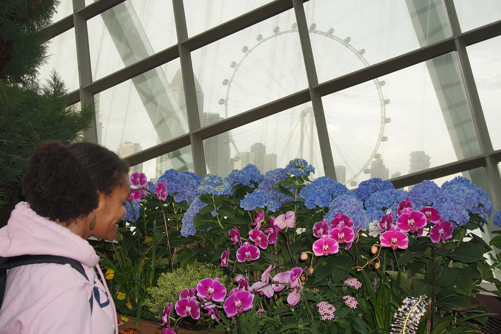 The floral exhibit not only had beautiful flowers from around the world and a view of the ferris wheel
