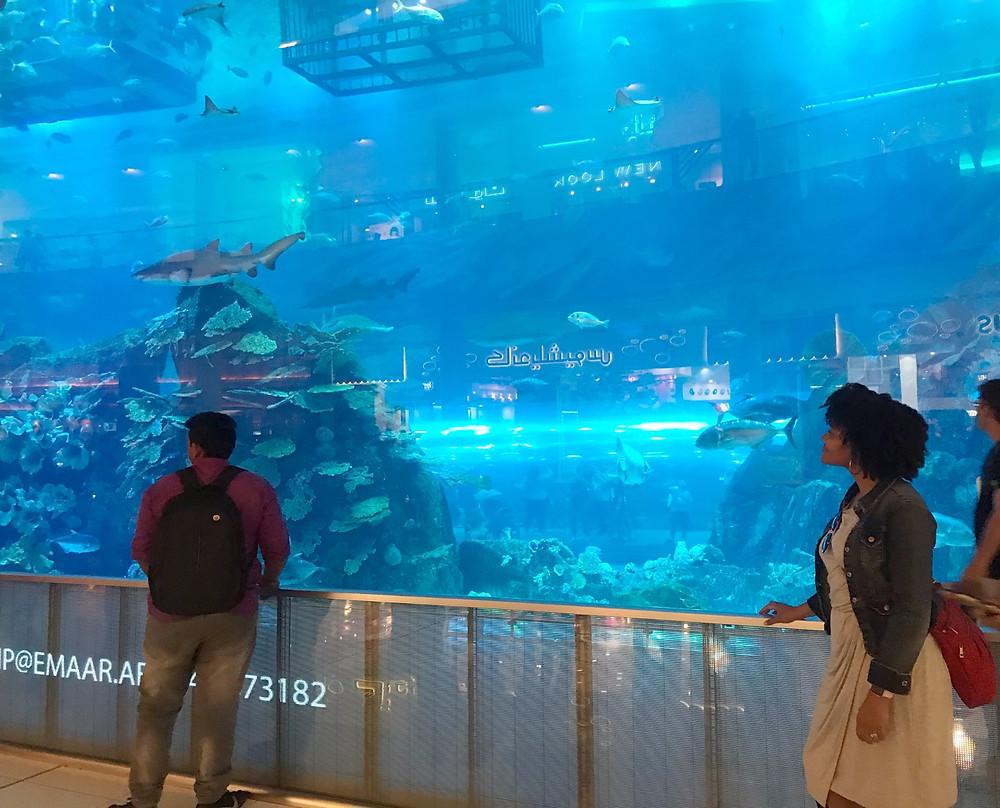 Dubai Aquarium and Zoo