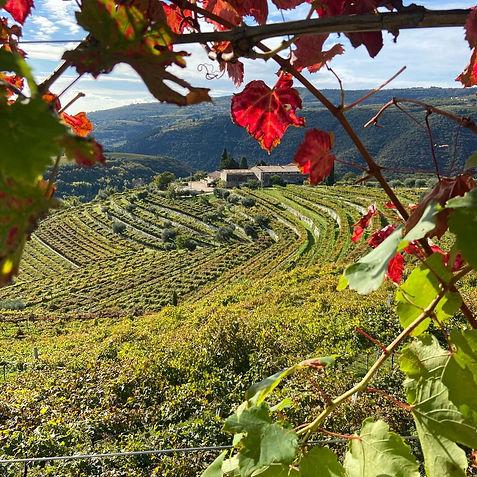 Foglie d'autunno Tenuta Santa Maria Valverde