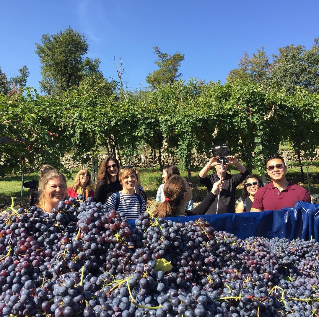 Harvesting in Valpolicella!