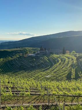 Vineyards Amarone