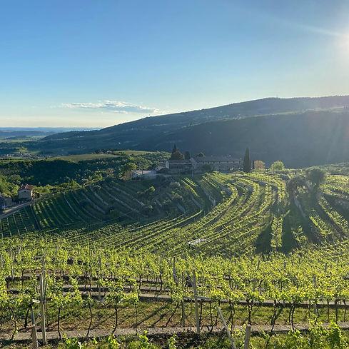 Panorama winery.jpg