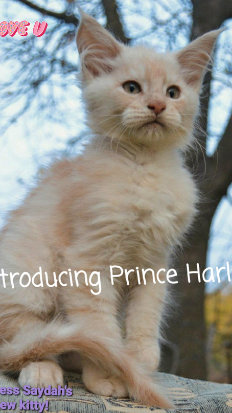 Prince Harley's Got Style! That's So Breezy, Babe!